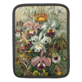 Ernst Haeckel - Orchidae Sleeve For iPads