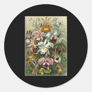 Ernst Haeckel Orchidae Round Stickers