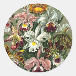 Ernst Haeckel - Orchidae Round Stickers