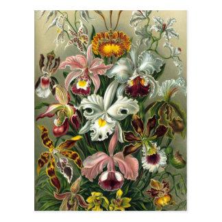 Ernst Haeckel - Orchidae Tarjeta Postal