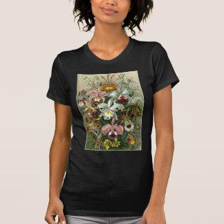 Ernst Haeckel - Orchidae Tee Shirt