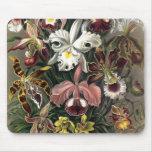 Ernst Haeckel - Orchideae Detail1 Tapetes De Ratones