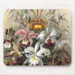 Ernst Haeckel - Orchideae Detail3 Tapetes De Ratones