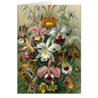 Ernst Haeckel Orchids, Vintage Rainforest Flowers Card