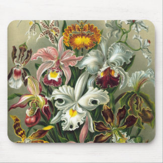 Ernst Haeckel Orchids, Vintage Rainforest Flowers Mouse Pad