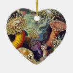 Ernst Haeckel Ornamento Para Reyes Magos