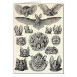 Ernst Haeckel - palos del Chiroptera Tarjeta De Felicitación