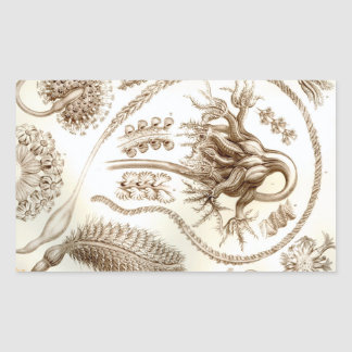 Ernst Haeckel Pennatulida Coral Rectangular Sticker