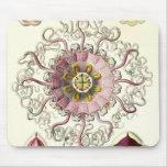 Ernst Haeckel - Peromedusae Detail Mouse Pad