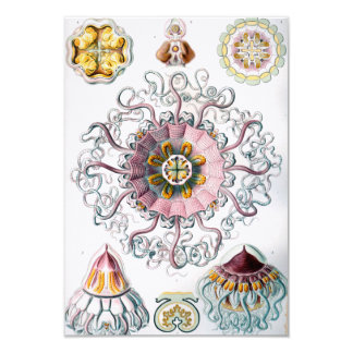 Ernst Haeckel Peromedusae Jellyfish Card