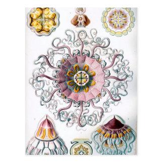 Ernst Haeckel Peromedusae Jellyfish Postcard