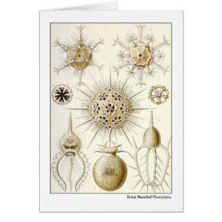 Ernst Haeckel Phaeodaria Card