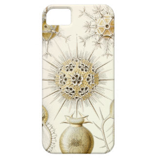 Ernst Haeckel Phaeodaria iPhone SE/5/5s Case