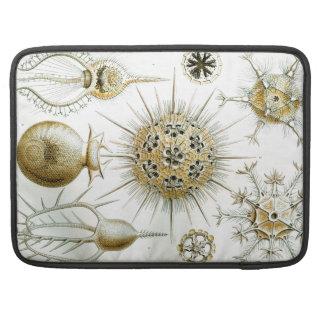 Ernst Haeckel Phaeodaria MacBook Pro Sleeve