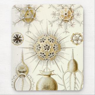 Ernst Haeckel Phaeodaria Mouse Pad
