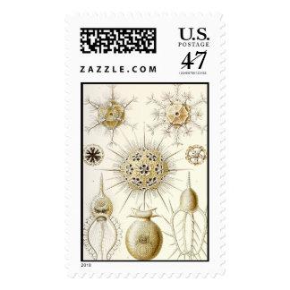 Ernst Haeckel Phaeodaria Postage