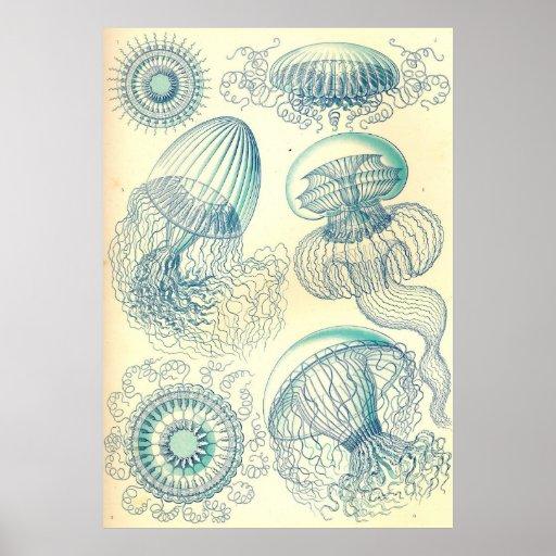 Ernst Haeckel - poster de Leptomedusae