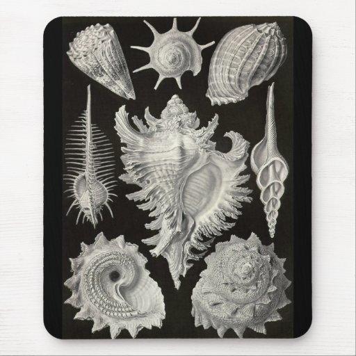 Ernst Haeckel - Prosobranchia Mouse Pad