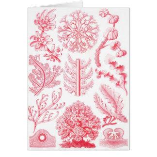Ernst Haeckel Red Florideae Greeting Card