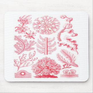 Ernst Haeckel Red Florideae Mouse Pad