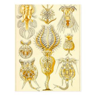 Ernst Haeckel Rotatoria Postcard