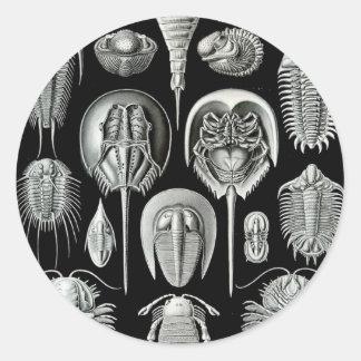 Ernst Haeckel s Aspidonia Stickers