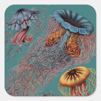 Ernst Haeckel s Disco Medusae Sticker