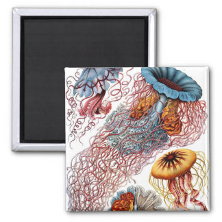 Ernst Haeckel's Discomedusae Magnets