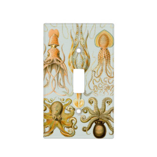 Ernst Haeckel's Gamochonia Switch Plate Cover