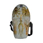 Ernst Haeckel's Gamochonia Messenger Bag