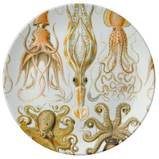 Ernst Haeckel's Gamochonia Plate