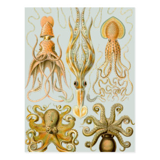 Ernst Haeckel's Gamochonia Postcard