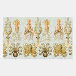 Ernst Haeckel's Gamochonia Rectangular Sticker