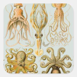 Ernst Haeckel's Gamochonia Square Sticker