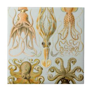 Ernst Haeckel's Gamochonia Tile