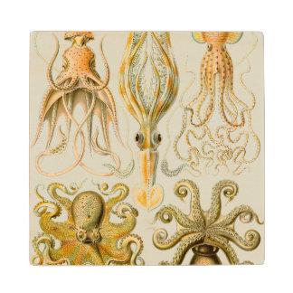 Ernst Haeckel's Gamochonia Wood Coaster