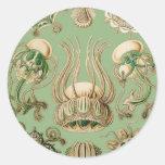 Ernst Haeckel's Narcomedusae Classic Round Sticker