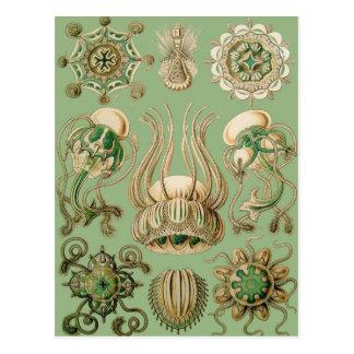 Ernst Haeckel's Narcomedusae Postcard