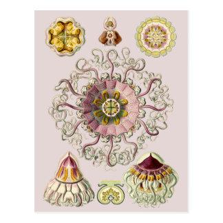 Ernst Haeckel's Peromedusae Postcard