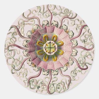 Ernst Haeckel's Peromedusae Stickers