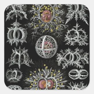 Ernst Haeckel s Stephoidea Square Sticker