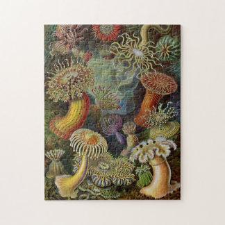 Ernst Haeckel Sea Anemones Puzzles