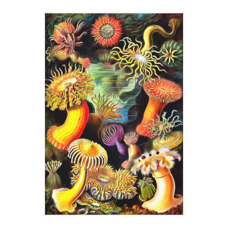 Ernst Haeckel Sea Anemones Vintage Art Canvas Prints
