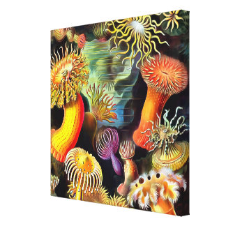 Ernst Haeckel Sea Anemones Vintage Art Stretched Canvas Prints