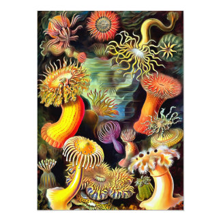 Ernst Haeckel Sea Anemones Vintage Art Card