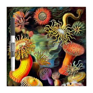 Ernst Haeckel Sea Anemones Vintage Art Dry-Erase Whiteboard