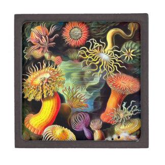 Ernst Haeckel Sea Anemones Vintage Art Keepsake Box