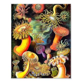 Ernst Haeckel Sea Anemones Vintage Art Art Photo