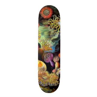 Ernst Haeckel Sea Anemones Vintage Art Skateboard
