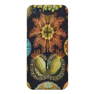 Ernst Haeckel Sea Life Nature iPhone Speck Case iPhone 5 Cover